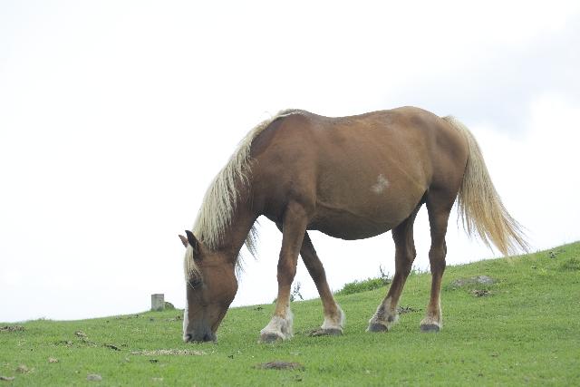 発達障害の二次障害でうつ病に。癒してくれたのは馬だった